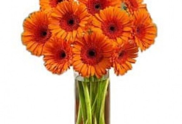 Orange Happy Gerberas