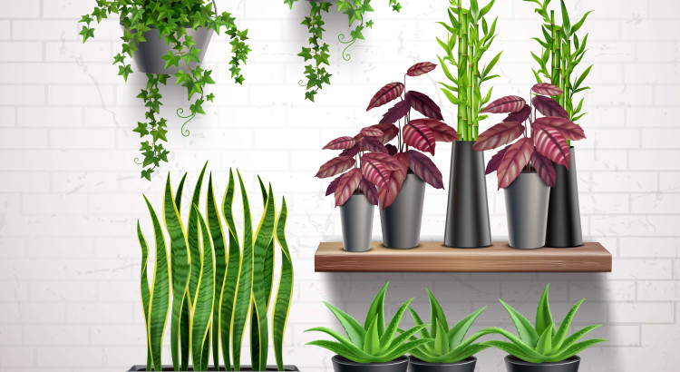indoor-plants-online