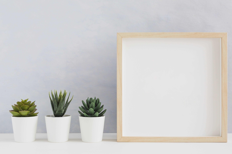 send plants online (1)
