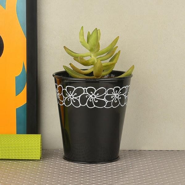 plants for holi