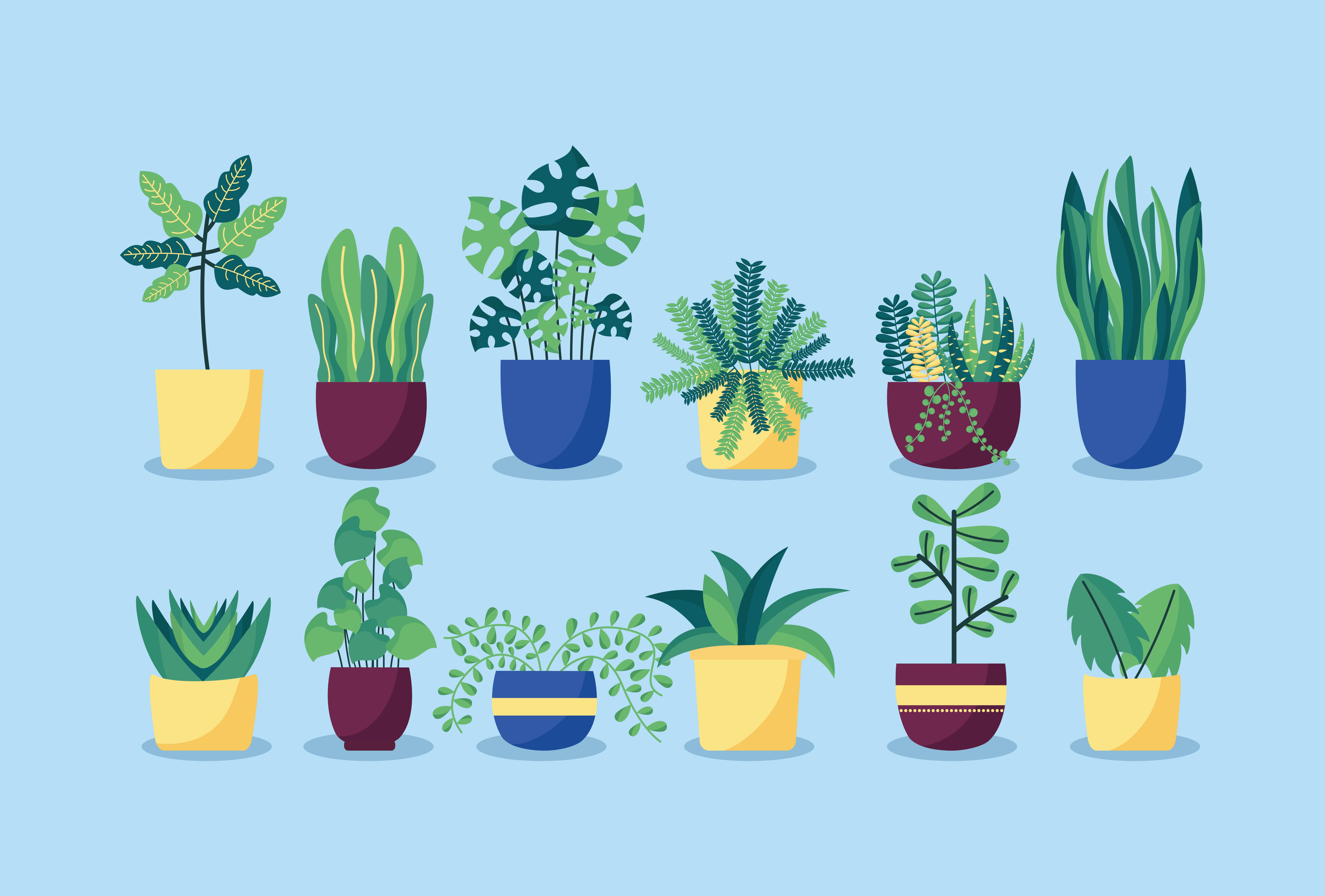 order plants online (1)