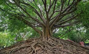 banyan tree online