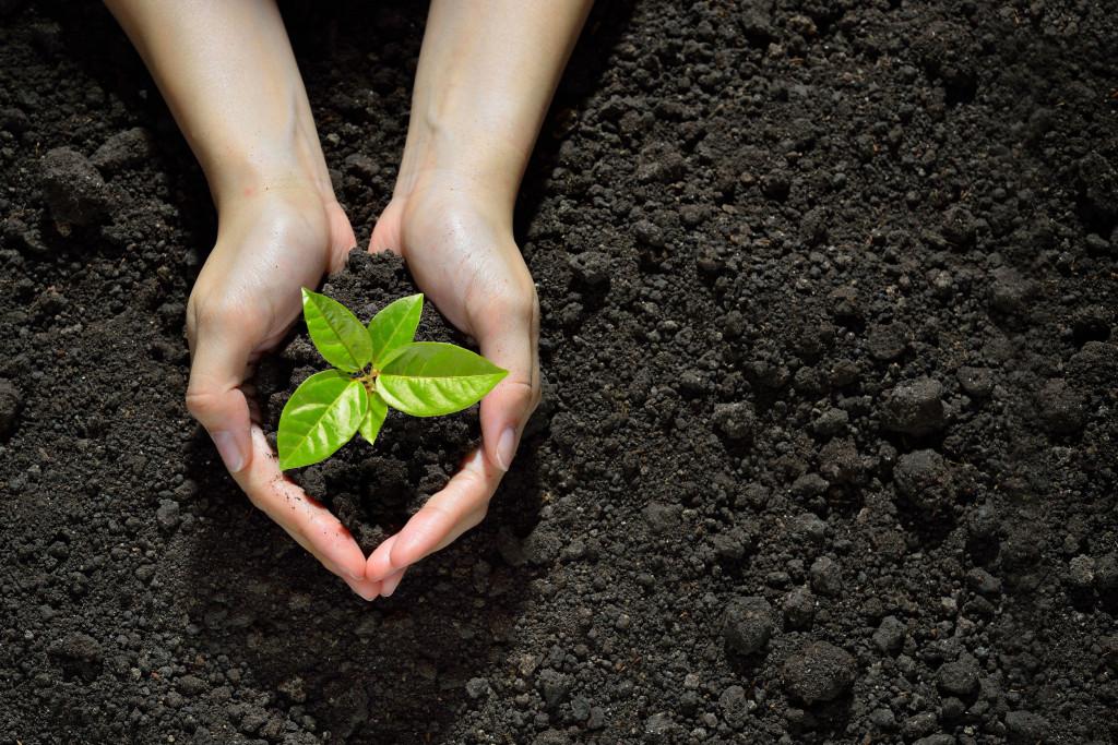 Encourage afforestation and avoid deforestation