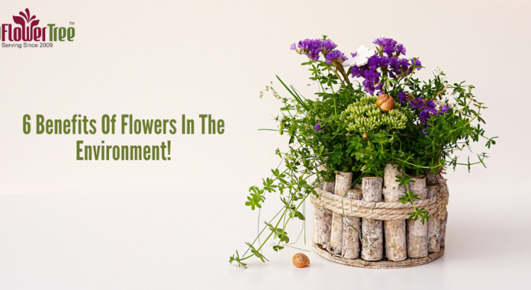 6 Benefits Of Flowers In The Environment!