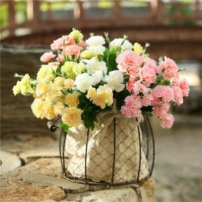 Carnation Flowers Delivery-MyFlowerTree