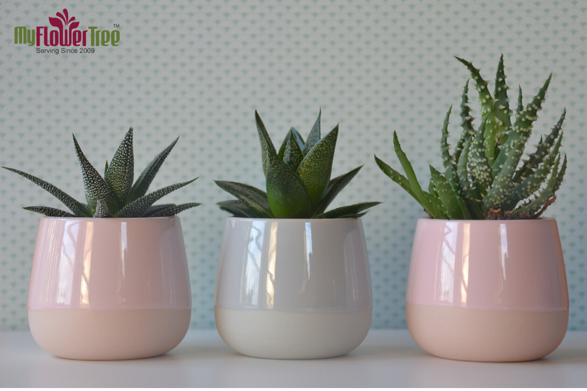What are The Benefits of Houseplant?