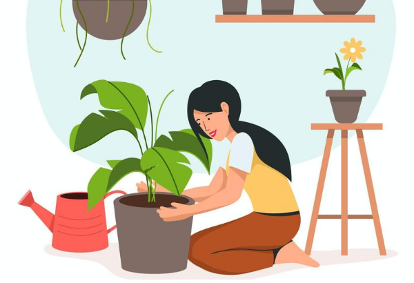 6 Types of Plants You Should Keep at Home