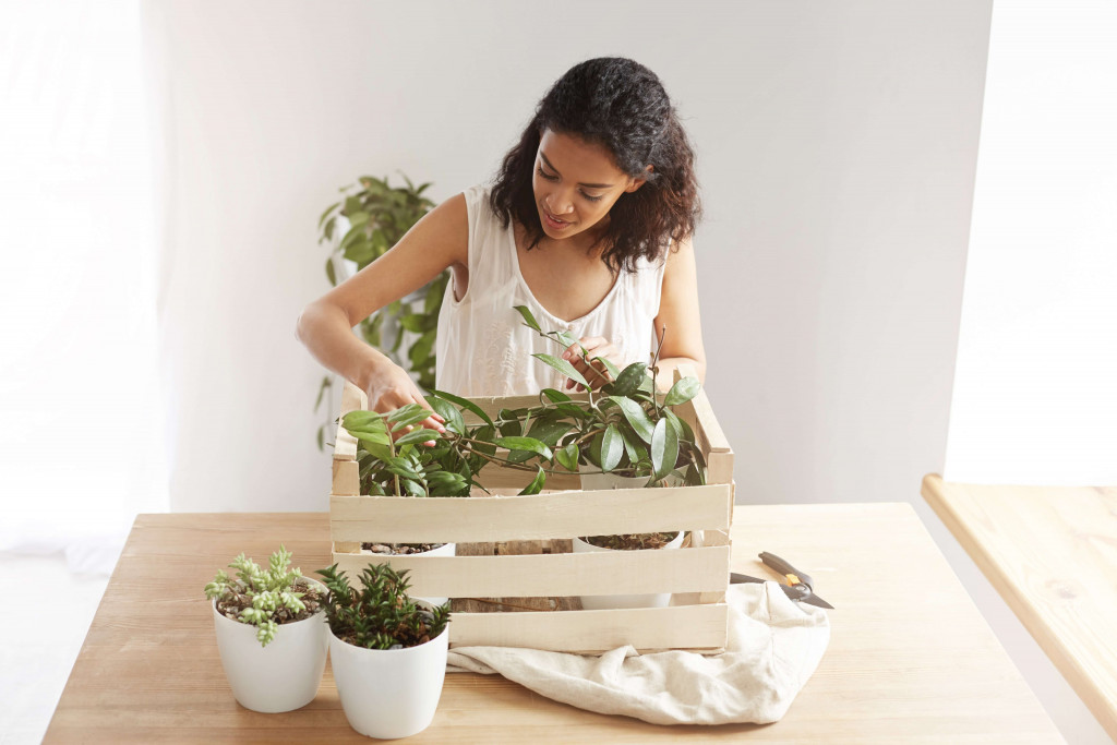 care for plants