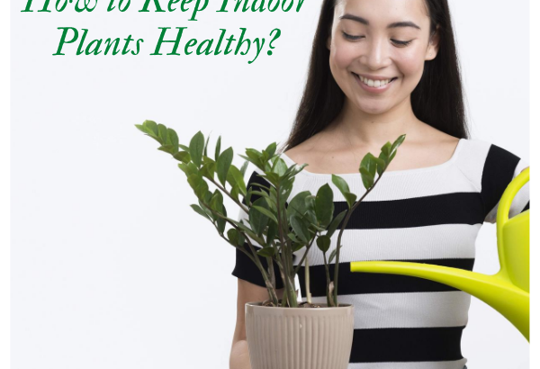 How to Keep Indoor Plants Healthy?