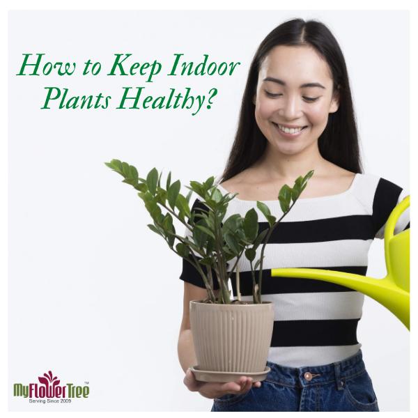How to Keep Indoor Plants Healthy?