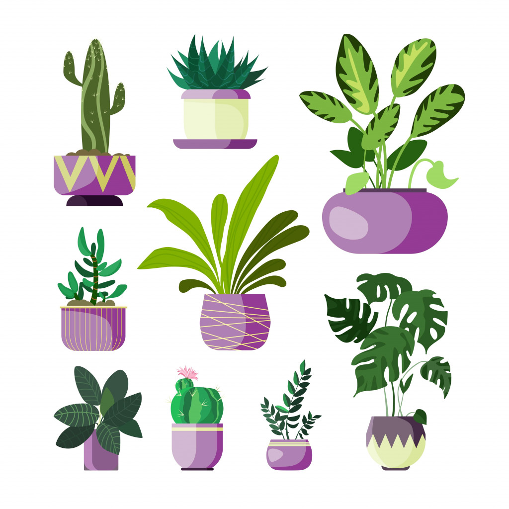 keep plants in different pots