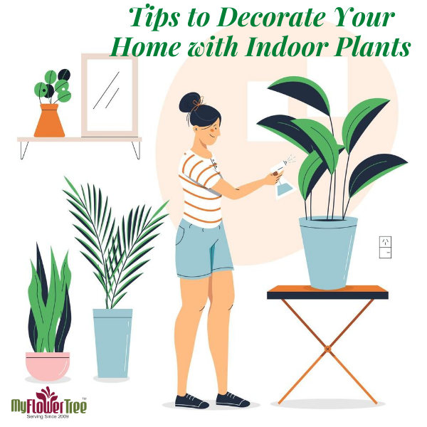 Tips to Decorate Your Home with Indoor Plants