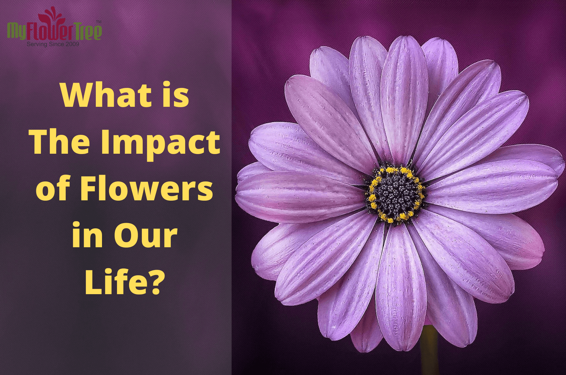 What is The Impact of Flowers in Our Life-MyFlowerTree