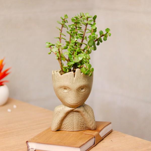 gift indoor plants to boss