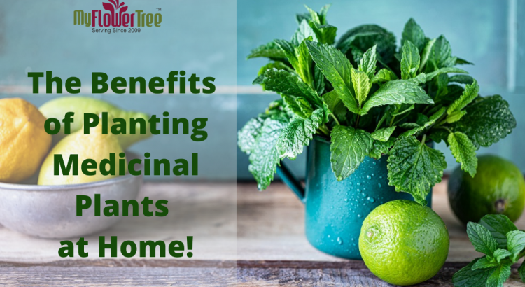 Top 7 Benefits of Planting Medicinal Plants at Home!