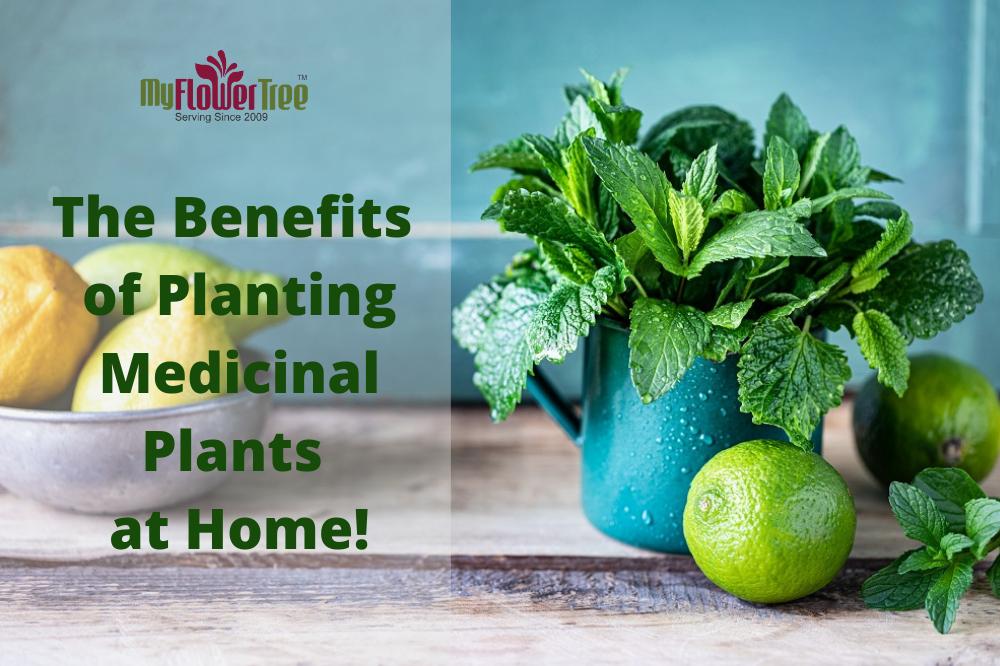 Top 7 Benefits of Planting Medicinal Plants at Home!