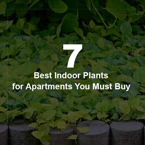 7 Best Indoor Plants for Apartments You Must Buy