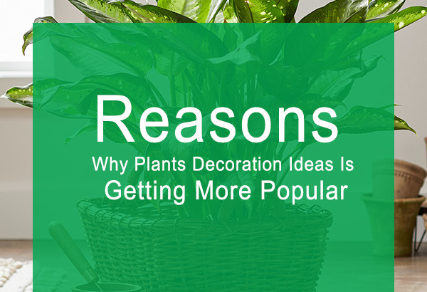 Plants Decoration Ideas