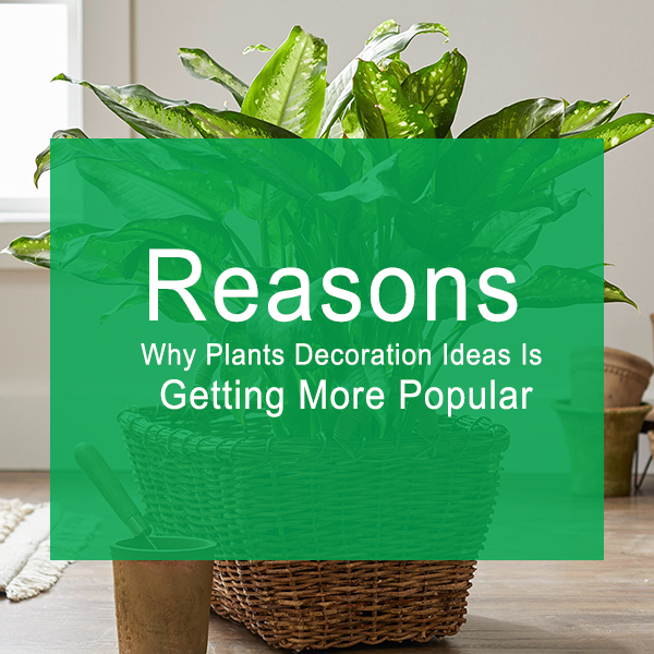Reasons Why Plants Decoration Ideas Is Getting More Popular