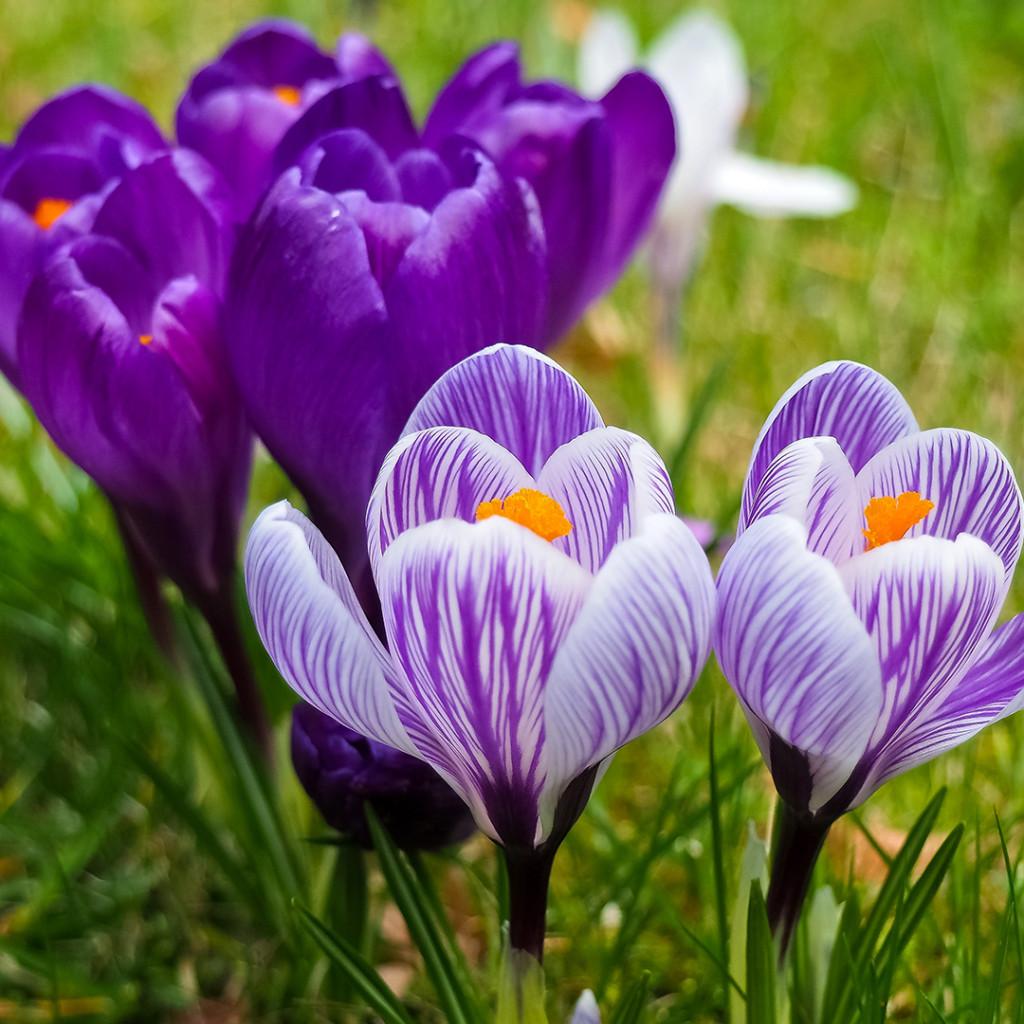 Wild-flower garden