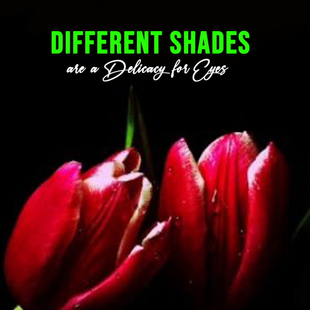 Different shades are a delicacy for eyes