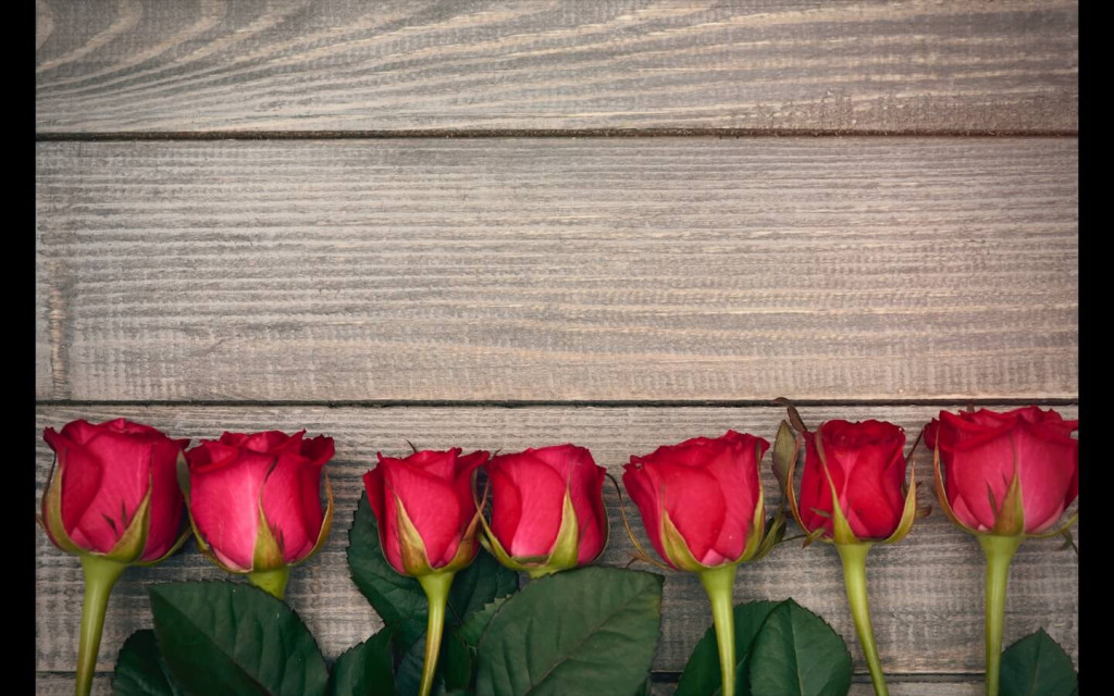 red roses for rose day