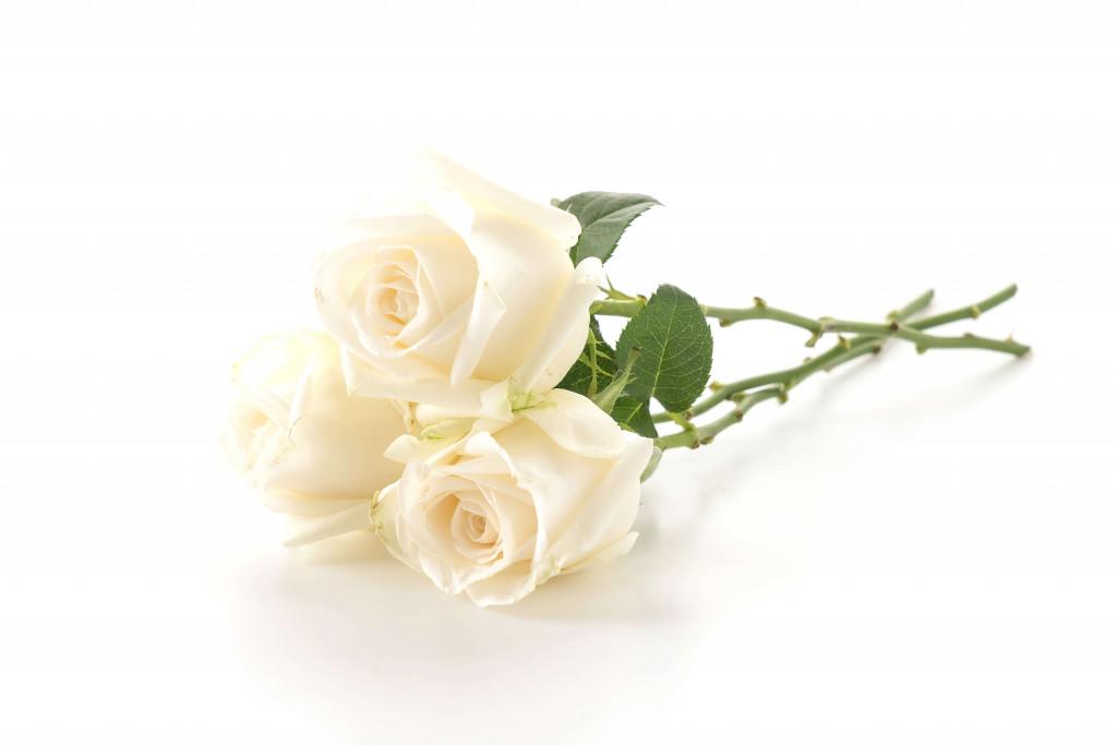 white rose for rose day
