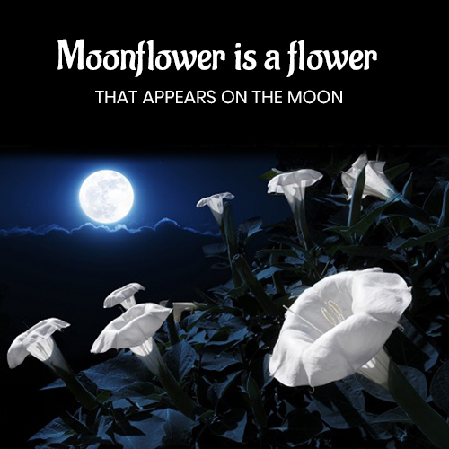 Moonflower is a flower that appears on the moon