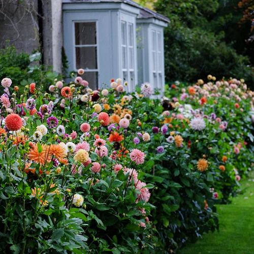 How will the combination of Vastu and plants energize the garden