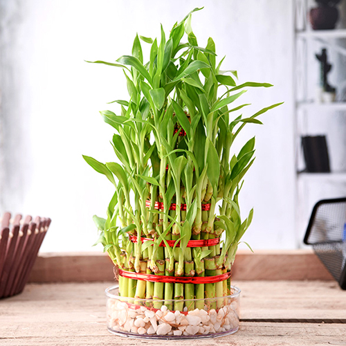 Properties of Indoor plants and Vastu Shastra