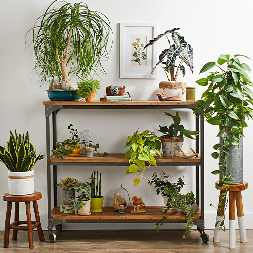 Properties behind arranging the indoor plants
