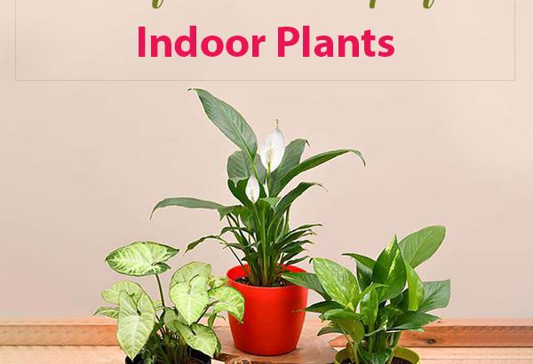 Vastu Tips for Indoor Plants