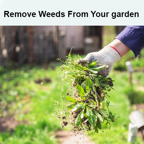 Remove Weeds From Your garden