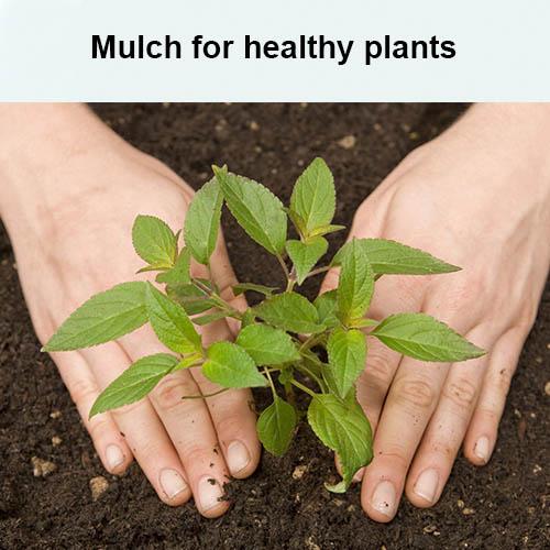 Mulch for healthy plants