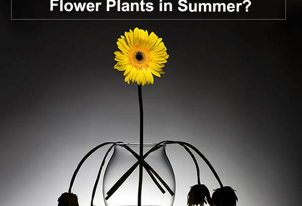 Protect Flower Plants