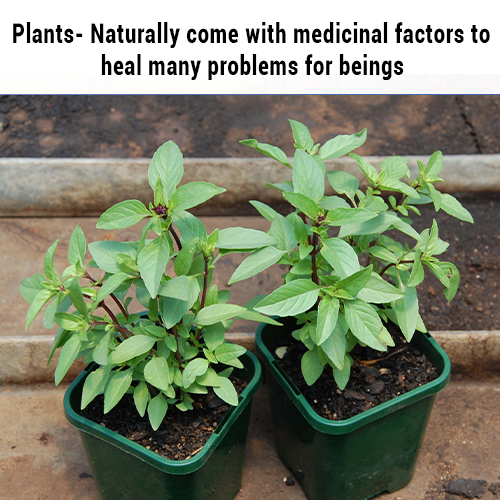 Plants- Naturally come with medicinal factors to heal many problems for beings