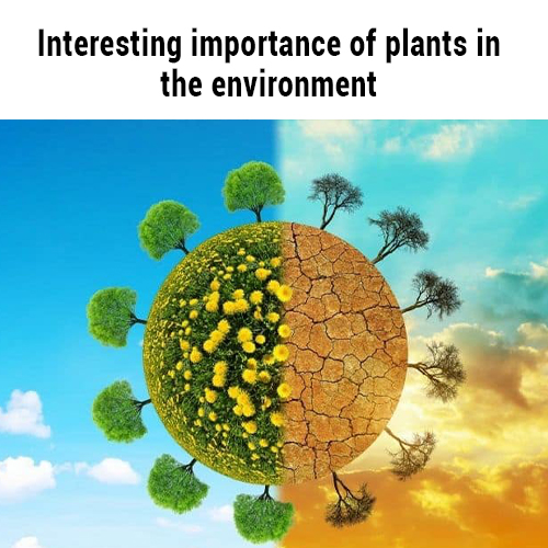 Interesting importance of plants in the environment