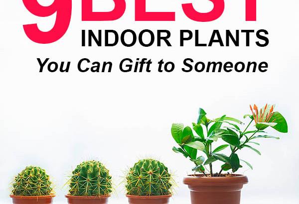 Indoor Plants Online