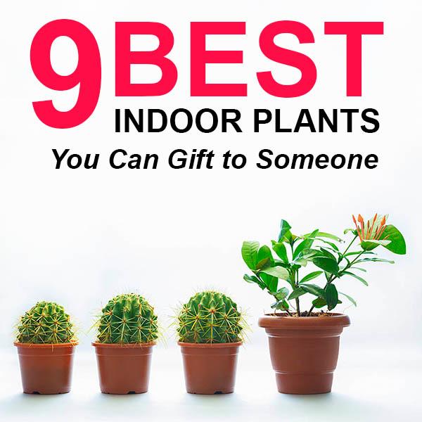 9 Best Indoor Plants Feature image