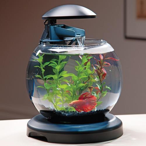 Bowl Aquarium