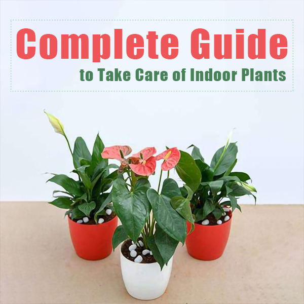 to Take Care of Indoor Plants feature image