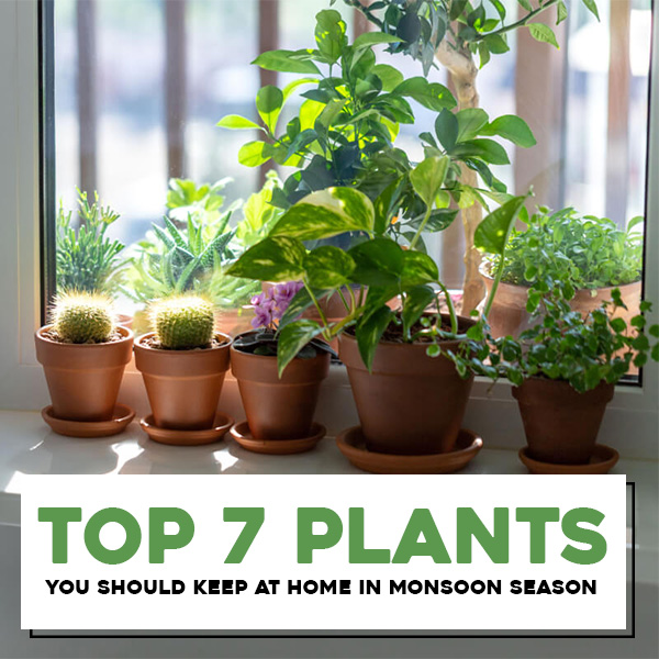 Top 7 Plants You Should Keep at Home in Monsoon Season