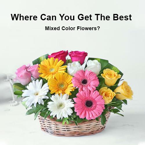 Где получить лучшие разноцветные цветы