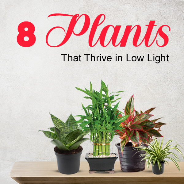 8 Plants That Thrive in Low Light
