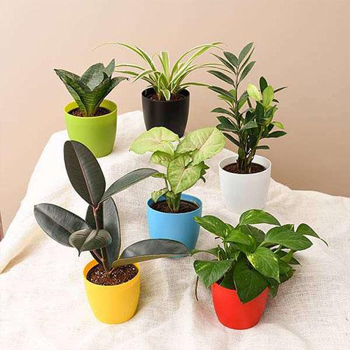 Healthy Indoor plants