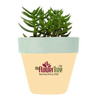 Online Plant Delivery