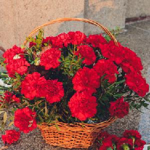 Anniversary Carnations