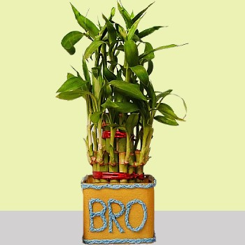 Plants for brother