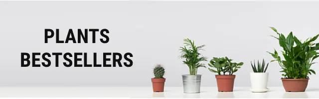 Plants Bestsellers