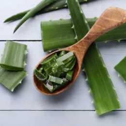 Herbs & Medicinal Plants